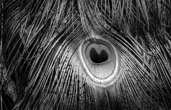 Photograph - Feather by Joye Ardyn Durham