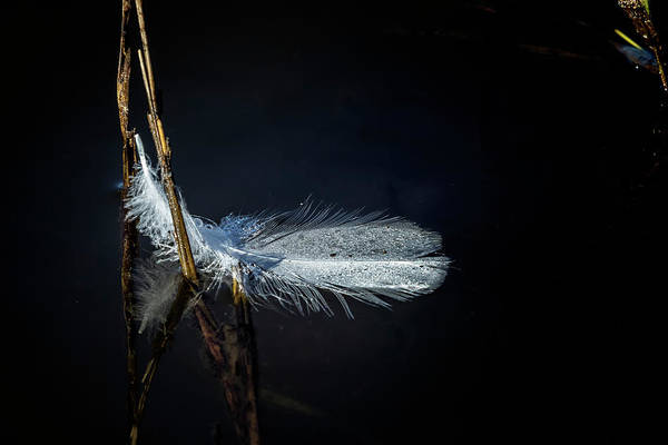 Photograph - Feather On Water by Belinda Greb