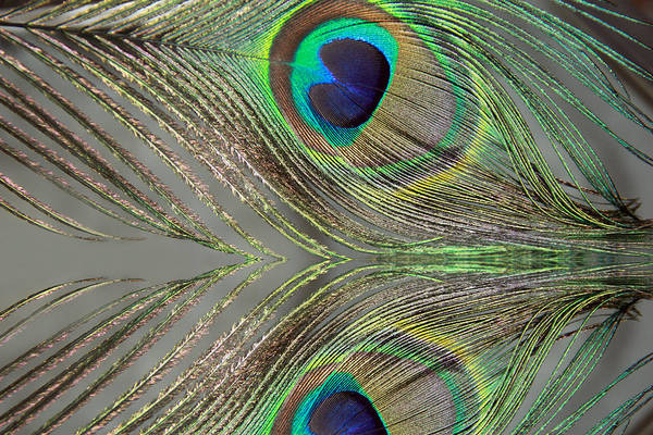 Photograph - Feather Reflections by Angela Murdock