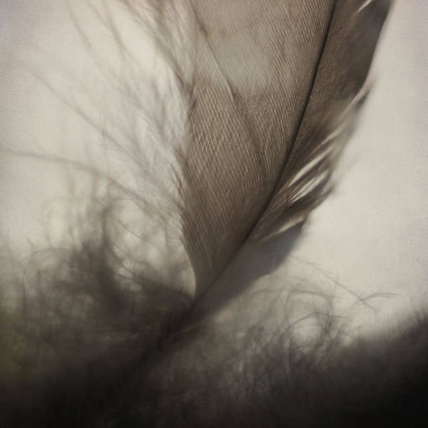 Photograph - Feather Light by Sally Banfill