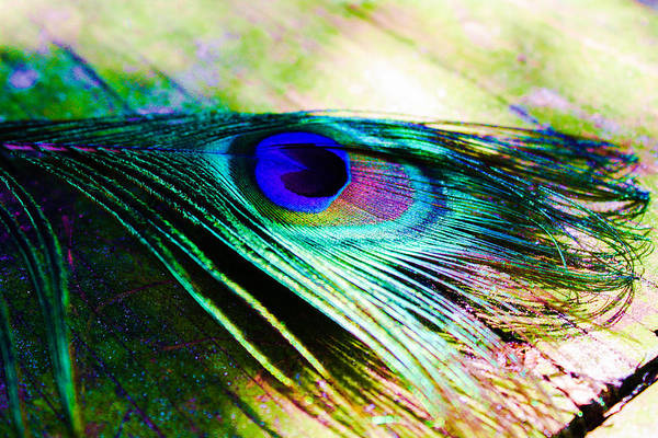 Photograph - Feather  by Stacey Rosebrock