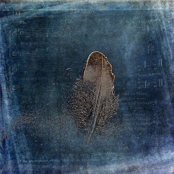 Photograph - Feather With Meaning by Randi Grace Nilsberg