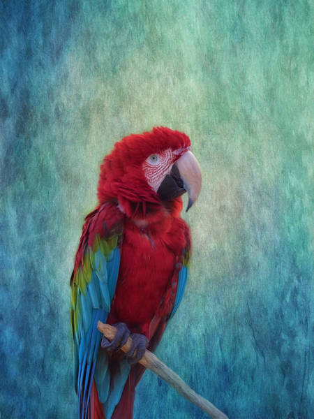 Wall Art - Photograph - Feathered Friend by Kim Hojnacki