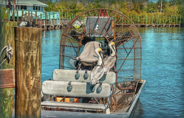 Airboat Photograph - Feathered Tourists by Hanny Heim