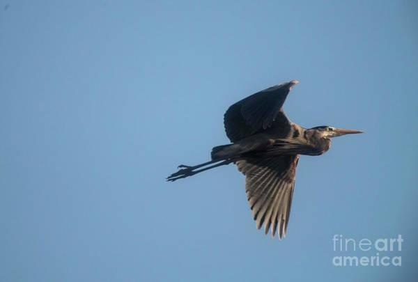 Rutland Photograph - Feathering The Nest by David Bearden