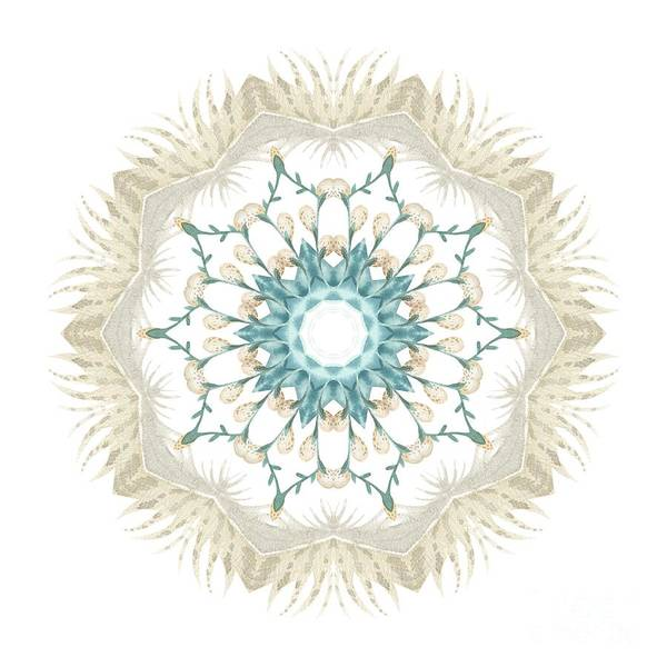 Wall Art - Digital Art - Feathers And Catkins Kaleidoscope Design by Mary Machare