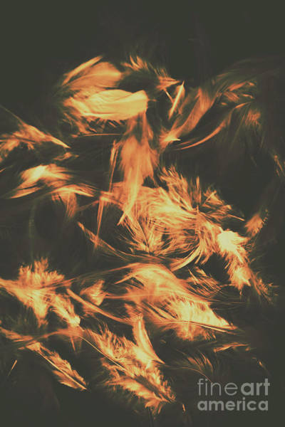 Dark Background Photograph - Feathers And Darkness by Jorgo Photography - Wall Art Gallery