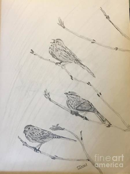 Drawing - Feathers Friends by Thomas Janos