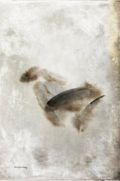 Photograph - Feathers From A Fight by Randi Grace Nilsberg