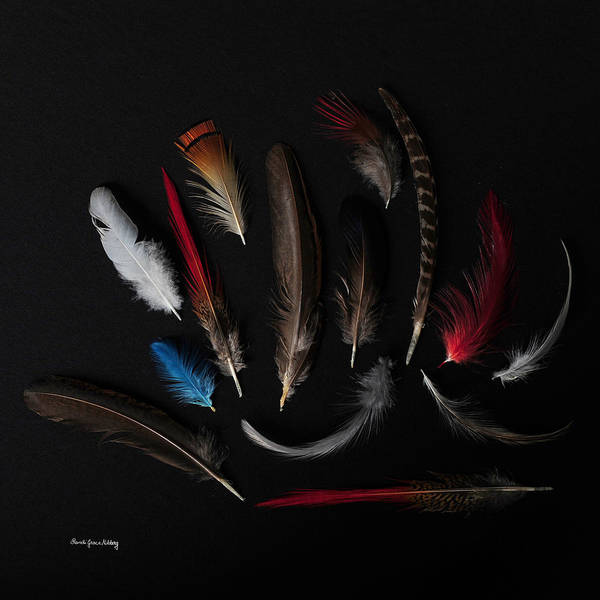 Photograph - Feathers From The Dark by Randi Grace Nilsberg