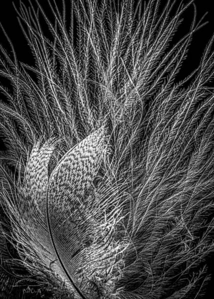 Photograph - Feathers In Black And White by Bob Orsillo