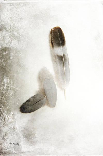 Photograph - Feathers Of Hope by Randi Grace Nilsberg