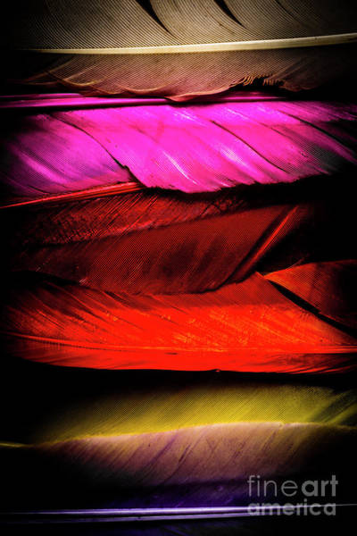 Natural Elements Photograph - Feathers Of Rainbow Color by Jorgo Photography - Wall Art Gallery