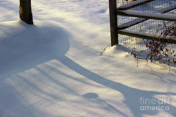 Photograph - February Morning by Karen Adams