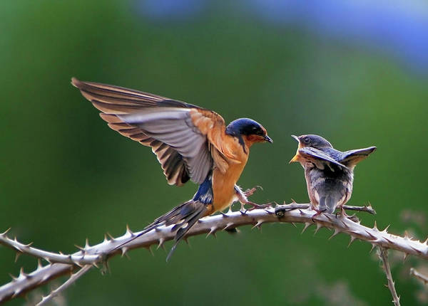 Bird Feeding Photograph - Feed Me by William Freebilly photography