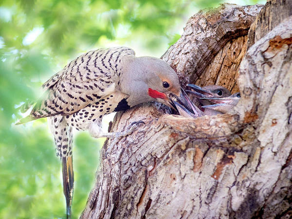 Photograph - Feeding Babies In The Nest by Judi Dressler