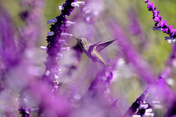 Wall Art - Photograph - Feeding In The Midst Of Purple 1 by Linda Brody
