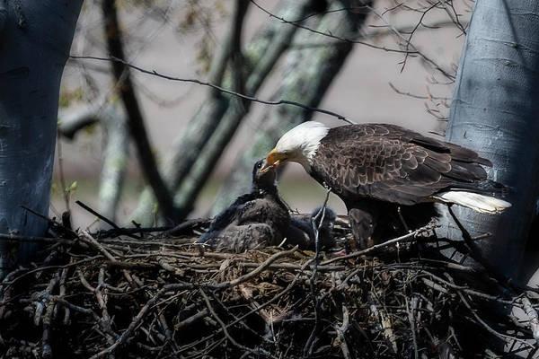 Photograph - Feeding Time Again by Dan Friend