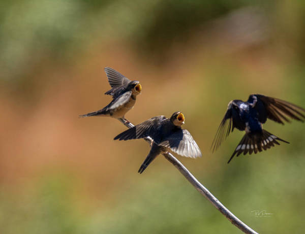 Photograph - Feeding Time by Bill Posner