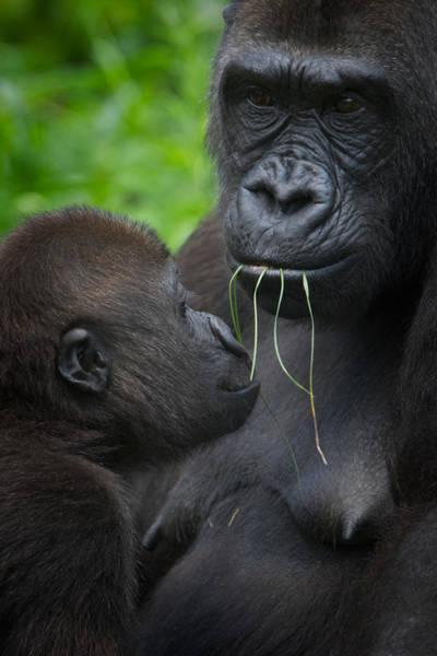 Photograph - Mothering Love  by Emmanuel Panagiotakis