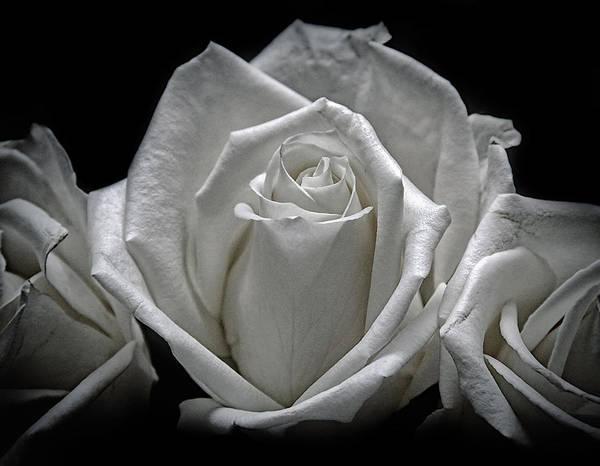 Photograph - Feel Better Roses by Elaine Malott