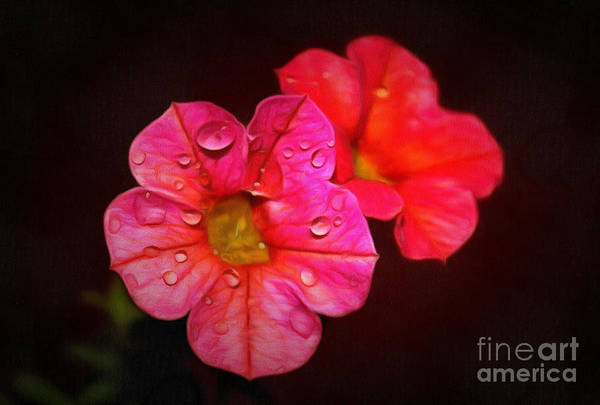 Petunias Photograph - Feeling Alive by Krissy Katsimbras