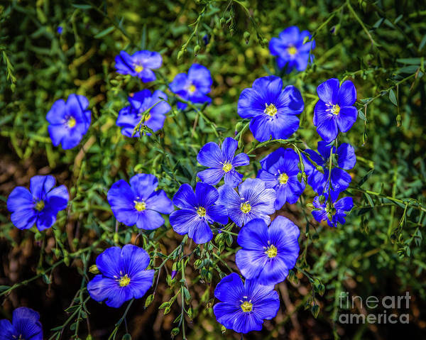 Photograph - Feeling Blue? by Jon Burch Photography