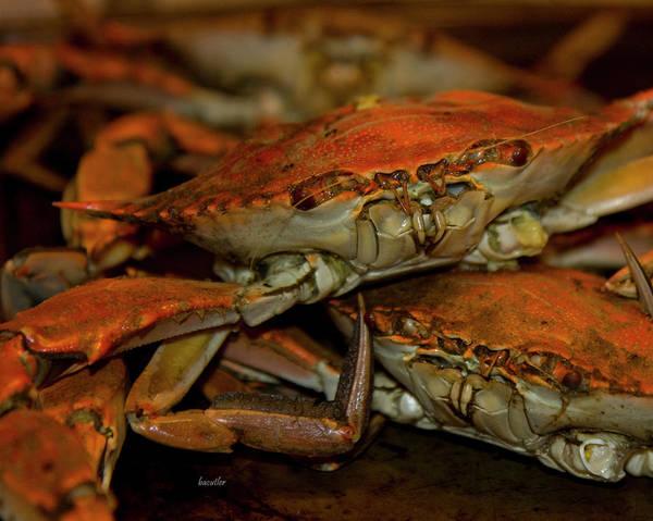 Crab Photograph - Feeling Crabby by Betsy Knapp