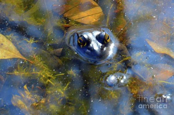 Photograph - Feeling Froggy by Robyn King