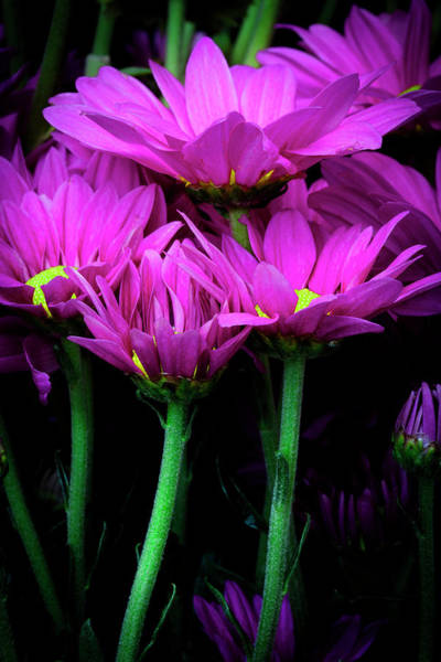 Photograph - Feeling Pink by Edgar Laureano