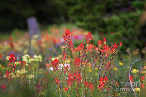 Photograph - Feild Of Flowers by Jim Garrison