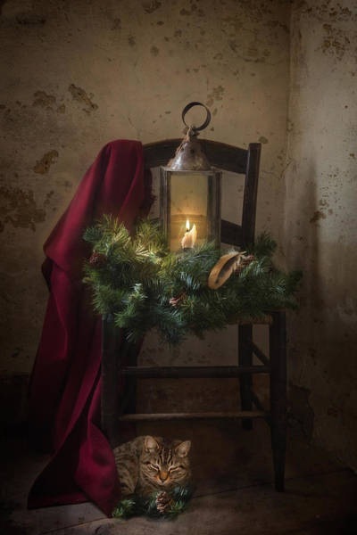 Photograph - Feliz Navidad by Robin-Lee Vieira