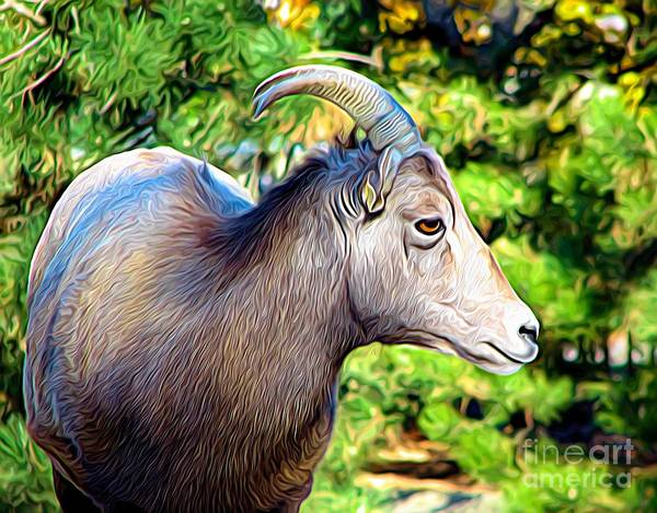Photograph - Female Bighorn Sheep Expressionist Effect by Rose Santuci-Sofranko