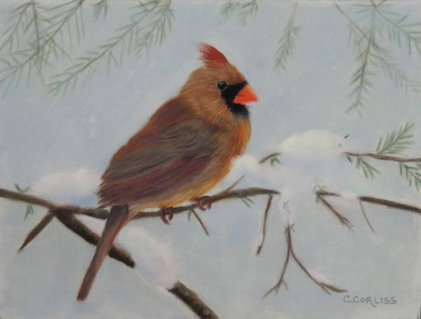 Pastel - Female Cardinal by Carol Corliss