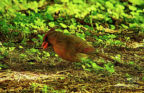 Digital Art - Female Cardinal Grounded by Kim Pate