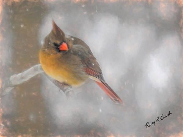 Digital Art - Female Cardinal Perching In Snow Storm. by Rusty R Smith