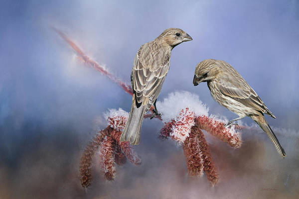 Photograph - Female Finches Sharing A Branch by Ericamaxine Price