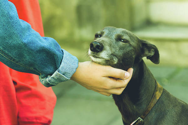 Photograph - Female Hand Petting A Dog B by Jacek Wojnarowski