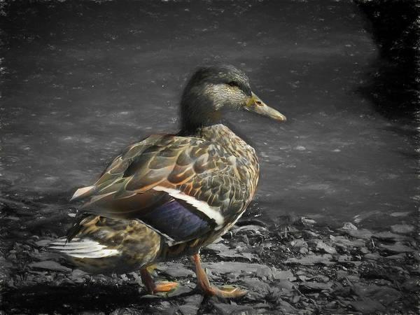 Digital Art - Female Mallard Duck by Rusty R Smith