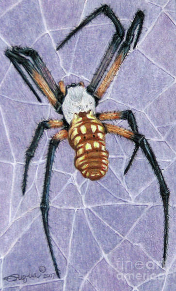 Wall Art - Drawing - Female Orb Spider by Beverly Fuqua