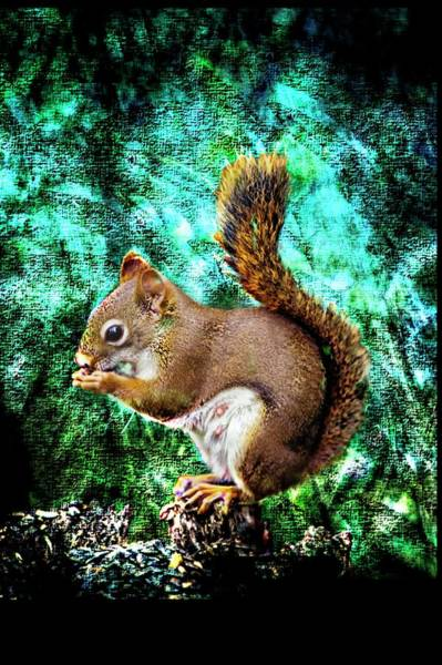 Photograph - Female Red Squirrel by Rusty R Smith