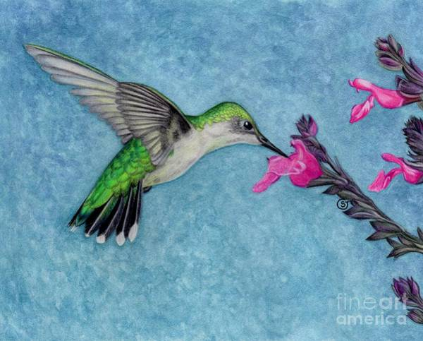 Snapdragons Painting - Female Ruby Throated Hummingbird by Sherry Goeben