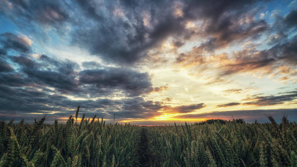 Photograph - Fen Field Sunset by James Billings