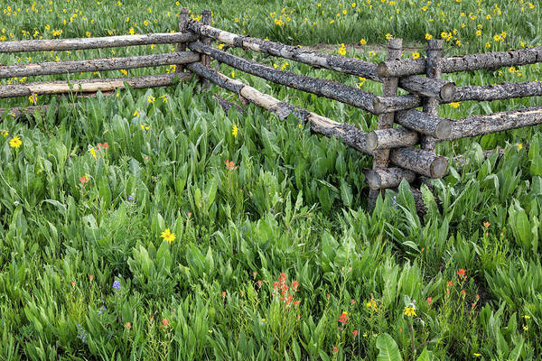 Photograph - Fence And Flowers by Denise Bush