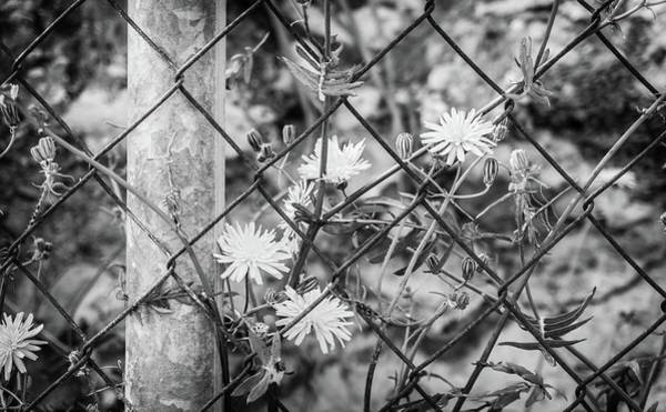 Photograph - Fence And Flowers. by Gary Gillette