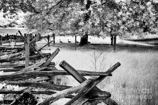 Wall Art - Photograph - Fence And Geese by Paul W Faust - Impressions of Light