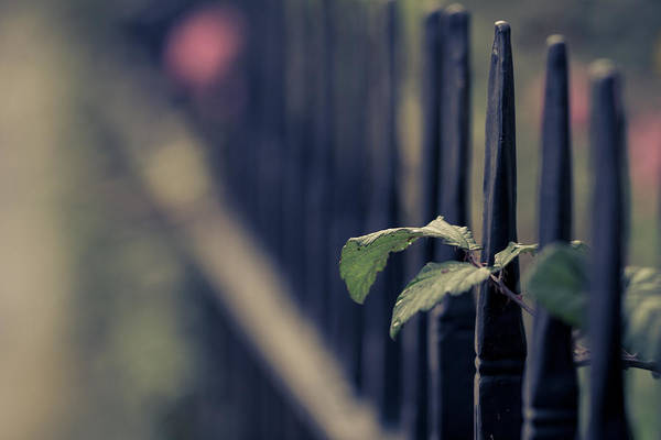 Photograph - Fence by Clare Bambers