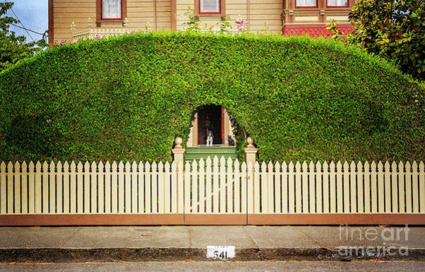 Photograph - Fence, Hedge, Dog And Cat by Craig J Satterlee