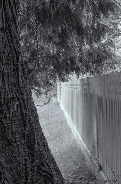 Photograph - Fence In Black And White by Tom Singleton
