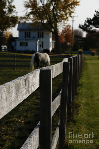 Photograph - Fence Line by Linda Shafer